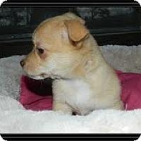 Adopt A Pet :: Tippy - Staunton, VA
