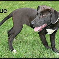 Adopt A Pet :: Prue - Houston, TX