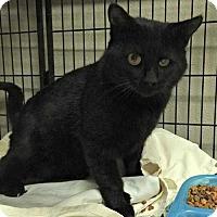Adopt A Pet :: Draco - San Angelo, TX