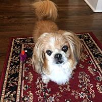 Adopt A Pet :: Cong - Alpharetta, GA