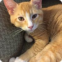 Adopt A Pet :: Rudy - Simpsonville, SC