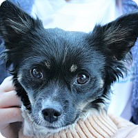 Adopt A Pet :: BUSTER - Hurricane, UT