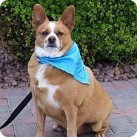 Adopt A Pet :: POOKIE - Las Vegas, NV
