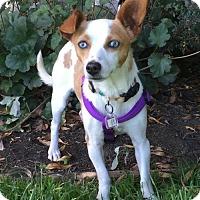 Adopt A Pet :: Naomi - Santa Cruz, CA