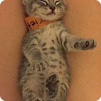 Adopt A Pet :: Harriett - Fullerton, CA