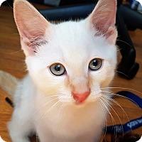 Adopt A Pet :: Drake - Vancouver, BC