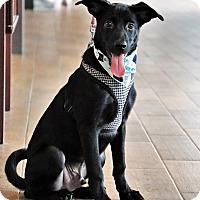 Adopt A Pet :: Life - San Mateo, CA