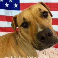 Adopt A Pet :: Tanner - Land O'Lakes, FL