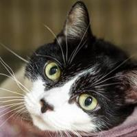Adopt A Pet :: Puddin - New Freedom, PA