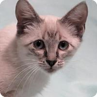 Adopt A Pet :: Emperor - Gonzales, TX