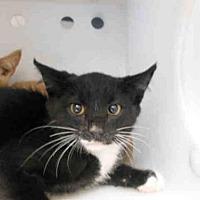 Adopt A Pet :: BOWTIE - Carlsbad, CA