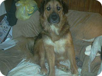 Bullmastiff/Shepherd (Unknown Type) Mix Dog for adoption in Baxter, Tennessee - Hoss
