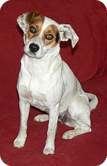 Beagle Mix Dog for adoption in Centerville, Tennessee - Claire
