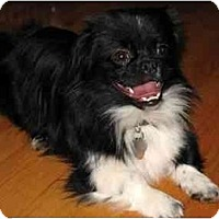 Adopt A Pet :: Tinker - Mays Landing, NJ