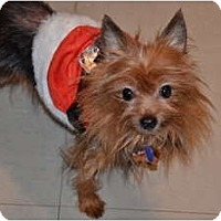 Adopt A Pet :: Stanley - Tallahassee, FL