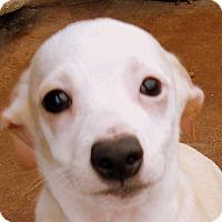 Adopt A Pet :: Baby Ricardo - Oakley, CA