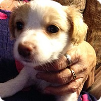 Adopt A Pet :: Chloe - Torrance, CA