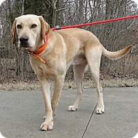 Adopt A Pet :: Theo - Lewisville, IN