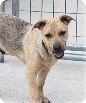 Terrier (Unknown Type, Medium) Mix Puppy for adoption in Jewett City, Connecticut - Finnegan
