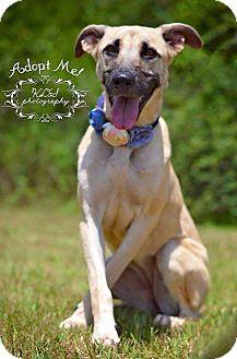 German Shepherd Dog Mix Dog for adoption in Fort Valley, Georgia - Jade