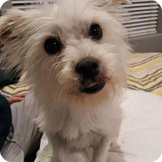 Terrier (Unknown Type, Small) Mix Dog for adoption in Santa Cruz, California - Maggie