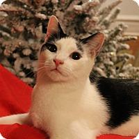 Domestic Shorthair Cat for adoption in McDonough, Georgia - Luke