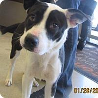 Adopt A Pet :: Louie - Von Ormy, TX