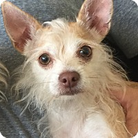Adopt A Pet :: DEVON - Palm Desert, CA
