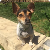Adopt A Pet :: Ruthie - Knoxville, TN