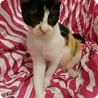 Adopt A Pet :: Ella - Baton Rouge, LA