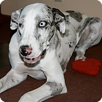 Adopt A Pet :: Macy - Indianapolis, IN