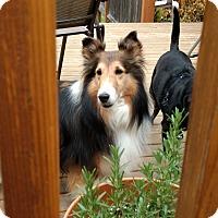 Adopt A Pet :: Lady - Bellingham, WA