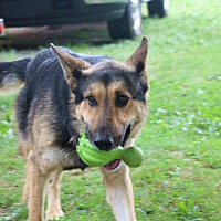 Adopt A Pet :: Keene - Nashua, NH