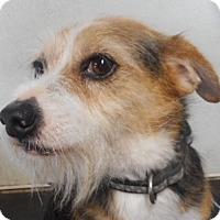 Adopt A Pet :: Barney - Yucaipa, CA