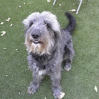 Adopt A Pet :: Zelda - Meridian, ID