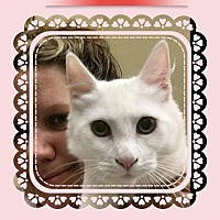 Adopt A Pet :: Zombie - San Bernardino, CA