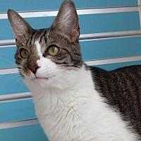 Adopt A Pet :: Mentor - Philadelphia, PA