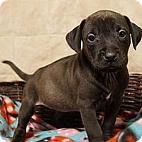 Adopt A Pet :: Vella - Hilliard, OH