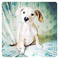 Adopt A Pet :: Jem - Louisville, KY