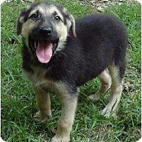 Adopt A Pet :: Brewster - Pike Road, AL