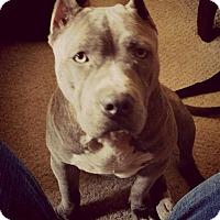 Adopt A Pet :: Belle - Naples, FL