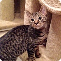 Adopt A Pet :: Sarafina - Colmar, PA