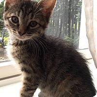 Adopt A Pet :: Annette - Horsham, PA