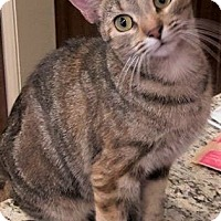 Adopt A Pet :: Lillymae - Chattanooga, TN