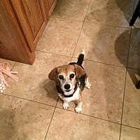 Adopt A Pet :: Molly Moo - Creston, CA