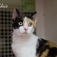 Adopt A Pet :: Elsie 17-0080 - Richardson, TX