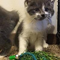 Adopt A Pet :: Dean - Evansville, IN