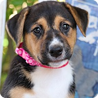 Adopt A Pet :: Posey von Madison - Thousand Oaks, CA