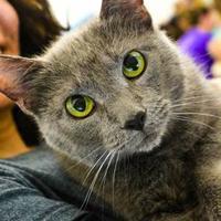 Adopt A Pet :: Lucie Lu - Baltimore, MD