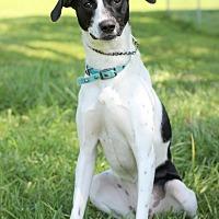 Adopt A Pet :: Makenzie - Waldorf, MD